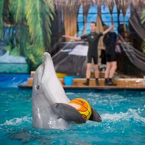 Дельфинарии, океанариумы Усмани