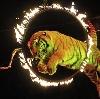 Цирки в Усмани