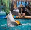 Дельфинарии, океанариумы в Усмани